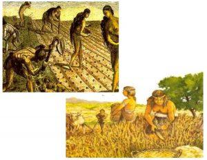 Explotación de las plantas como recurso alimenticio.